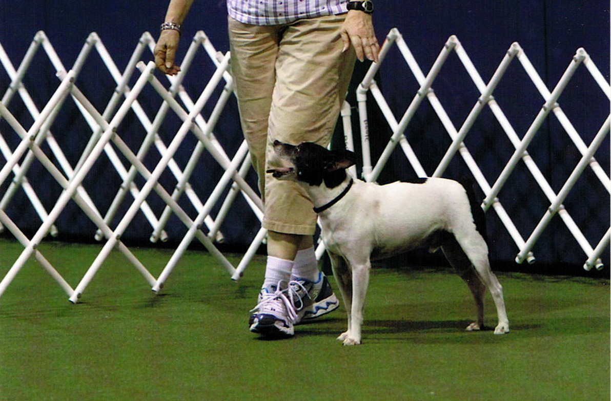 CDSP Video   Earn Obedience Titles through Video